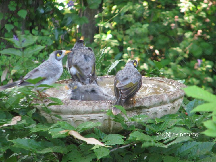 miners02_bird bath_binna burra _feb 2012