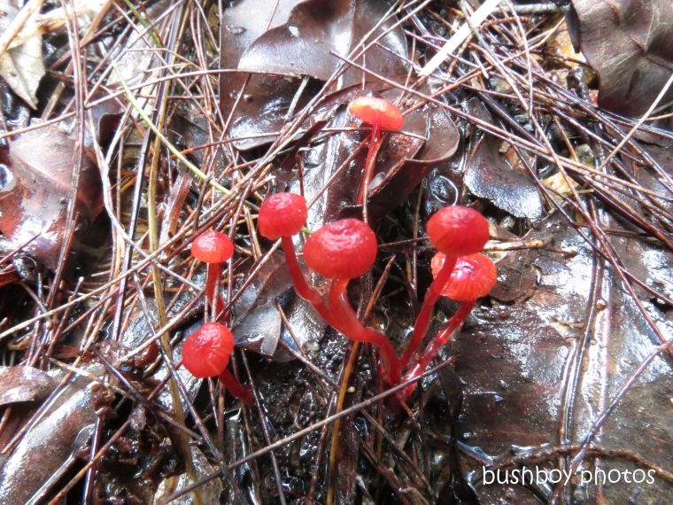 fungus_red_jan 2013