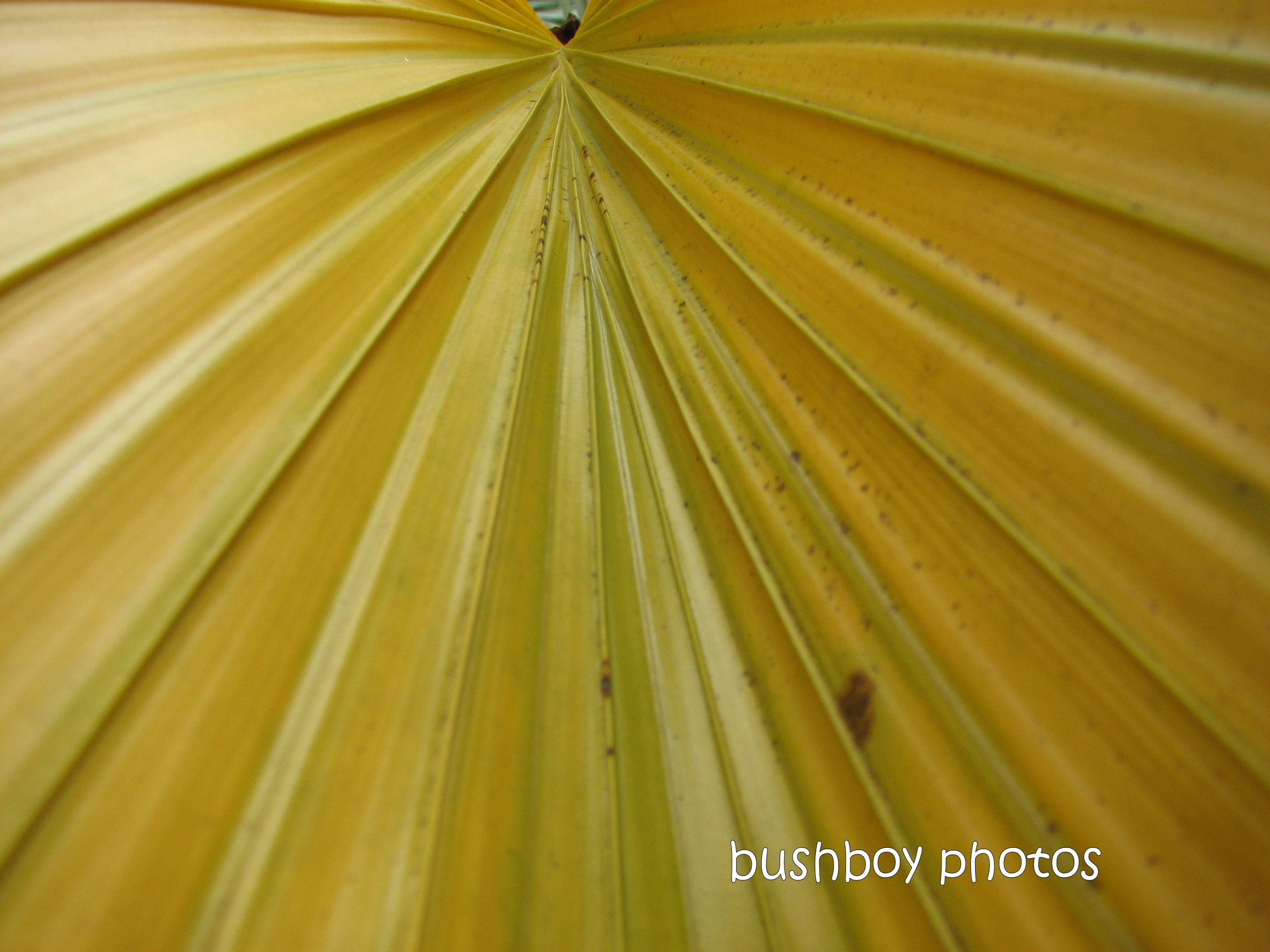 fern leaf_yellow2_home_named_jan 2012