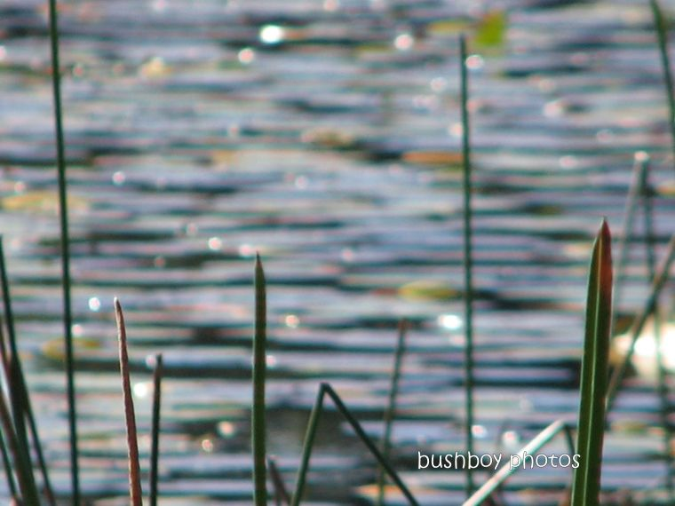 lake russell_reeds water_named