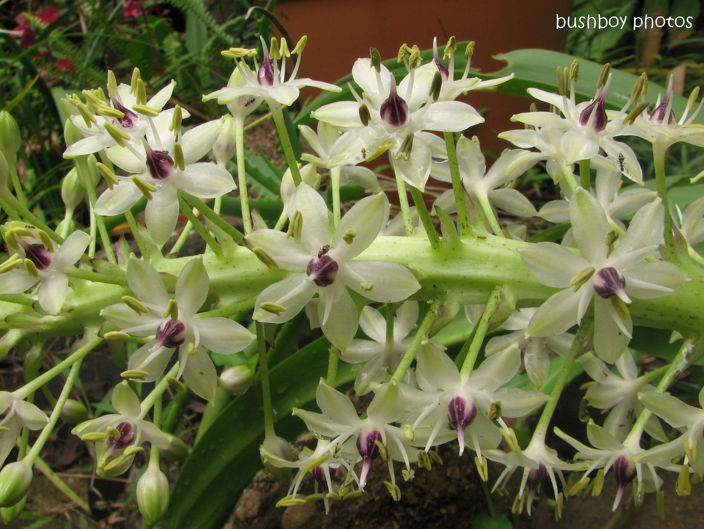 many flowers spike_home_jan 2012