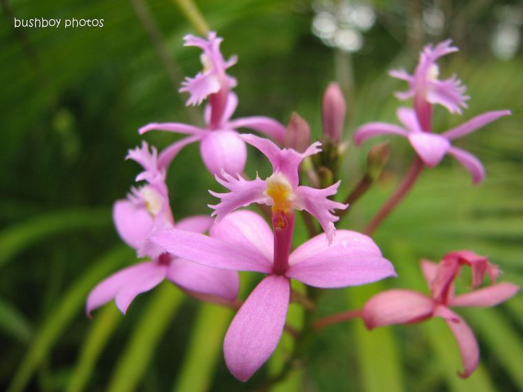 purple flower2_orchid_home_name_feb 2012