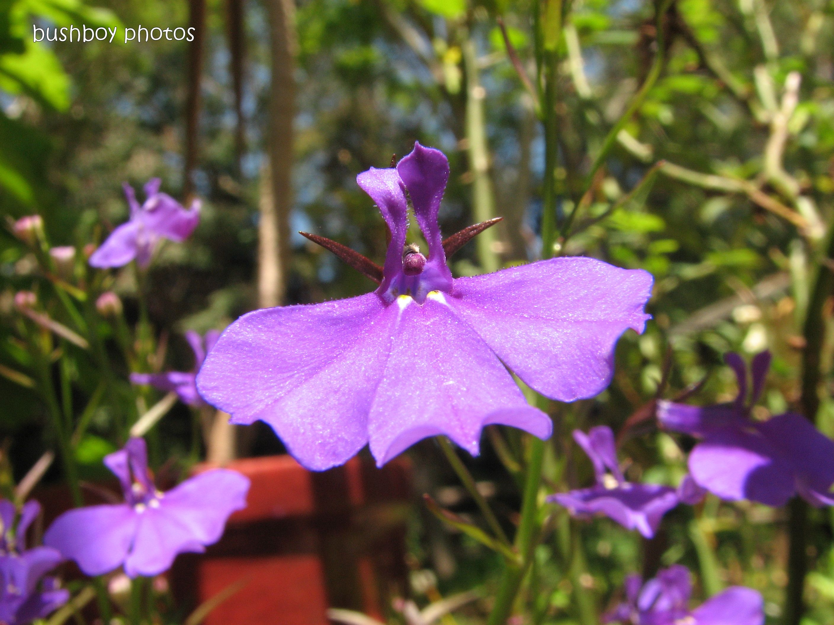 purple flower_close_binna burra_name_102011