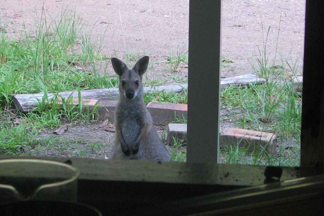wallaby_front verandah_crop_named_ jan 2011
