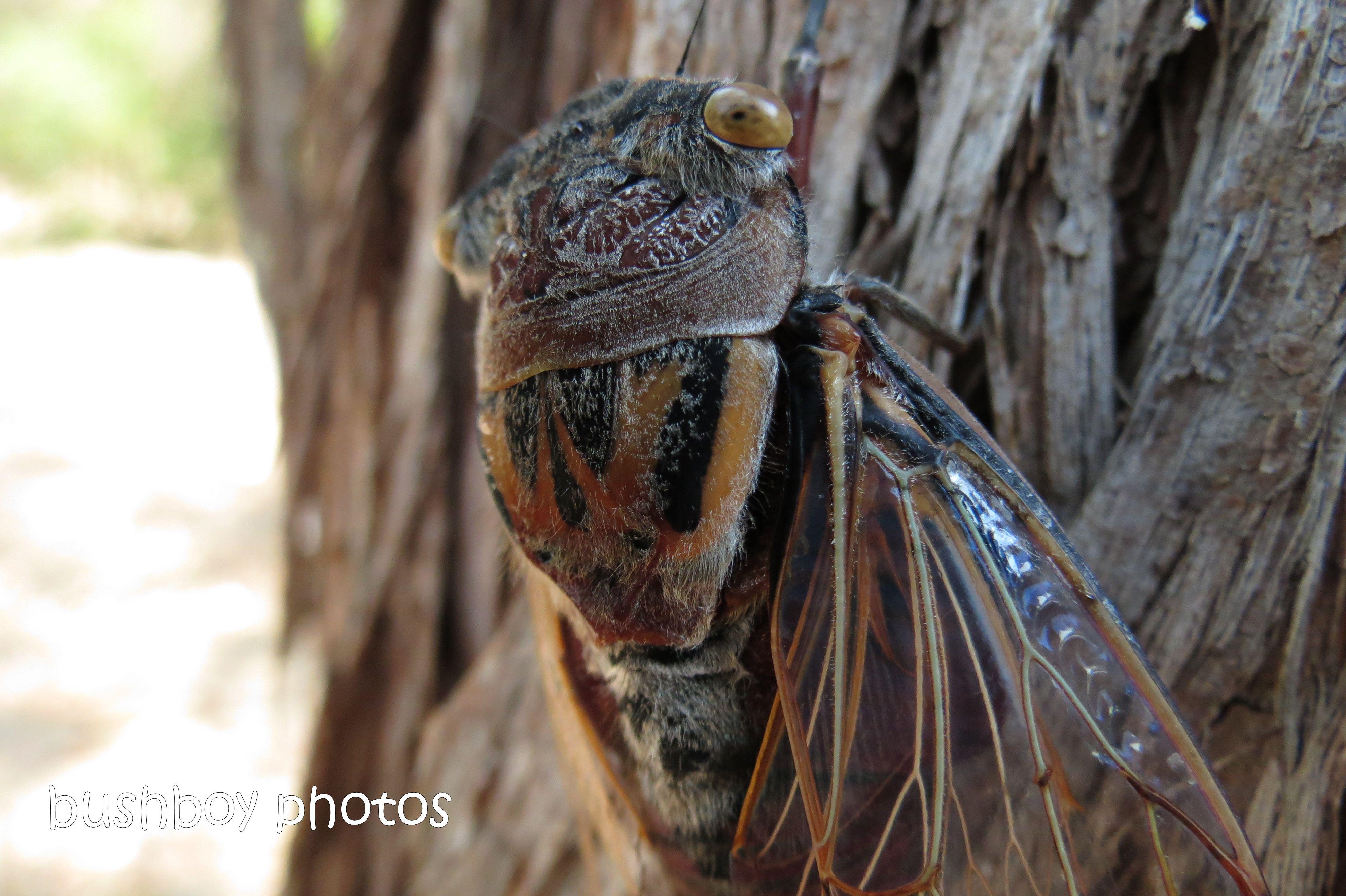 cicada01_home_nov 2013