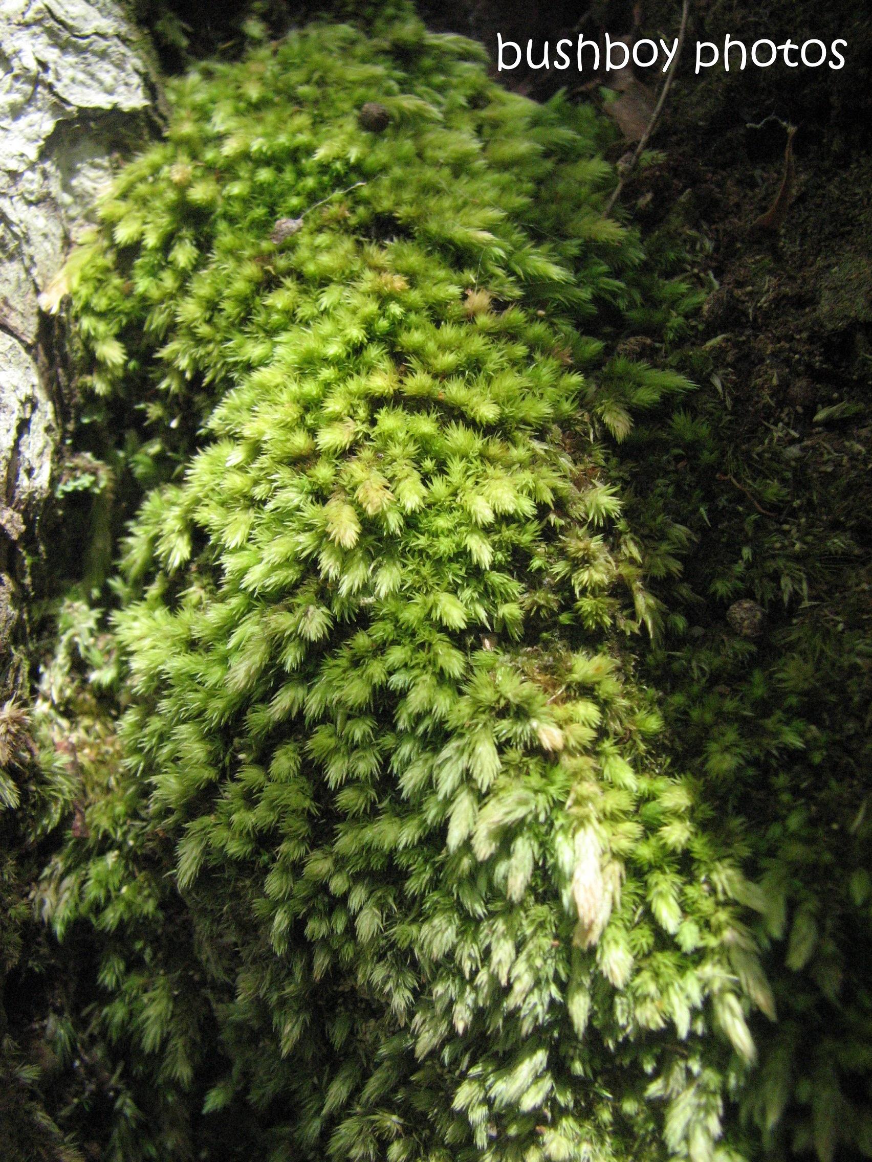 moss 009_named