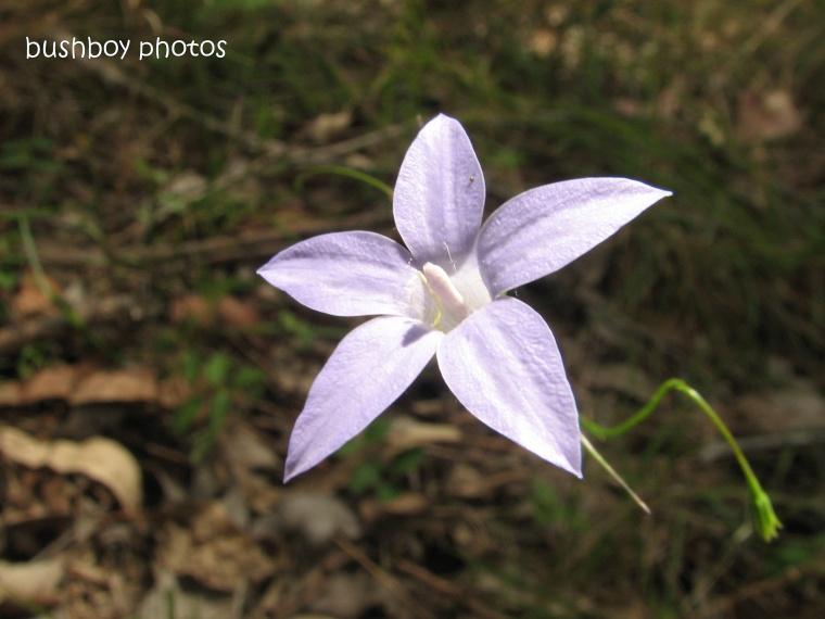 purple star flower7_named_home 2012