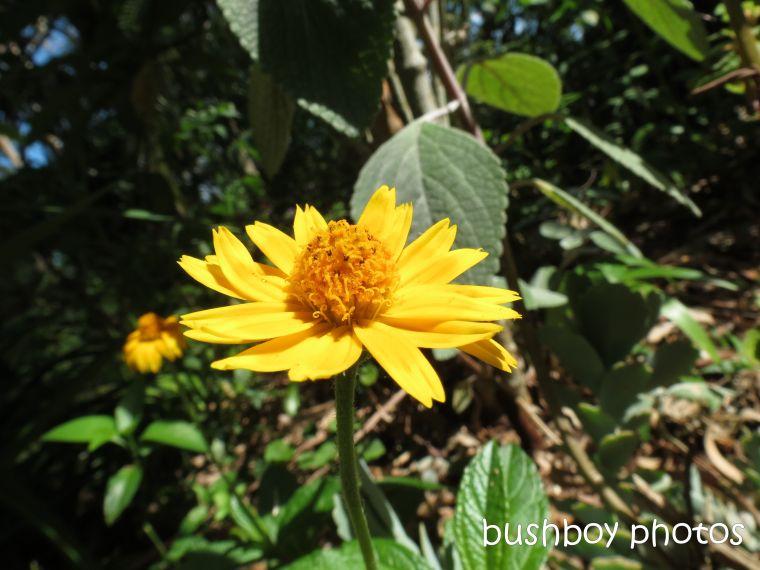 yellow daisy like flower02_home_named_dec 2013