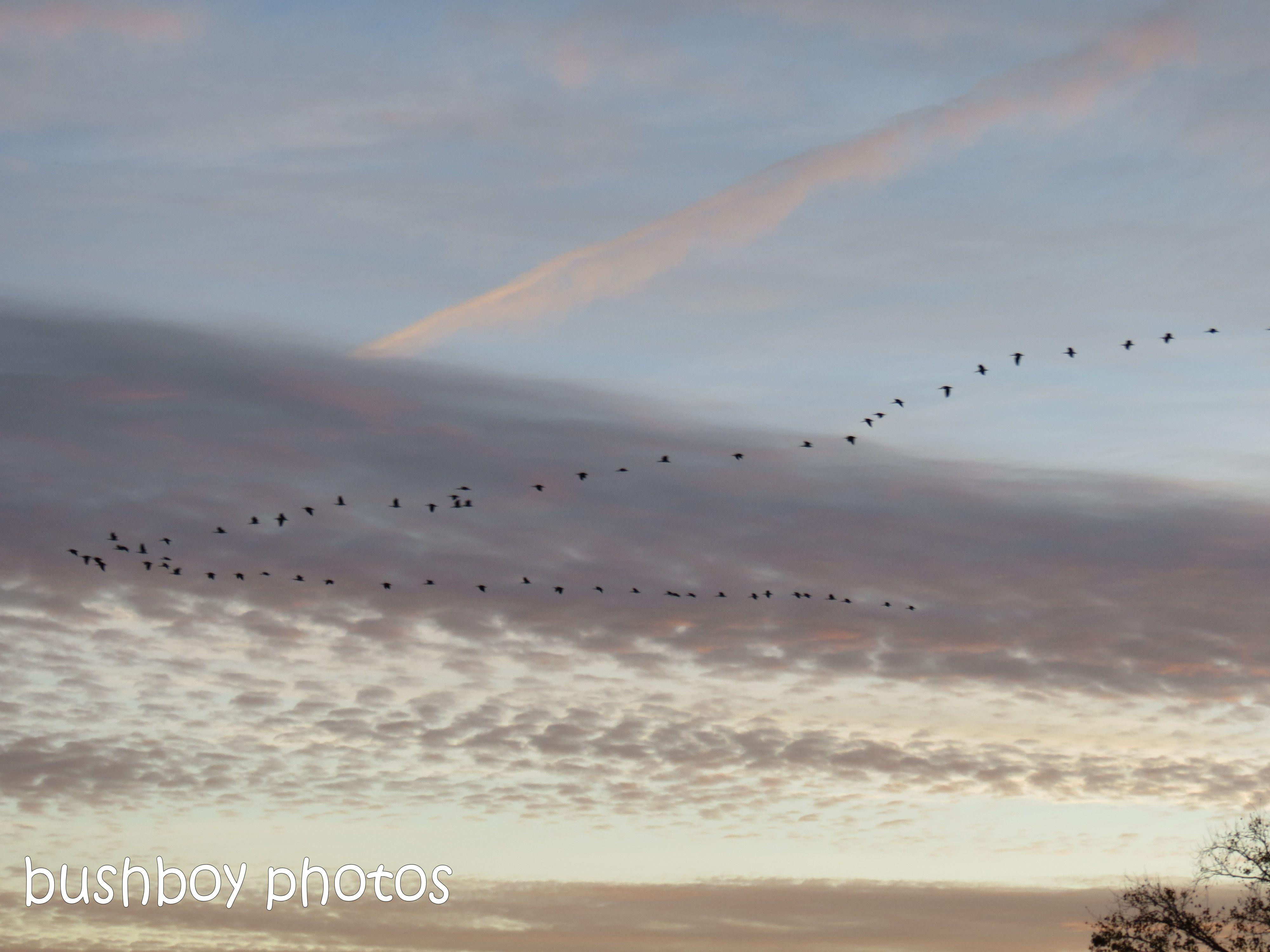 sunset04_birds_grafton_june 2014