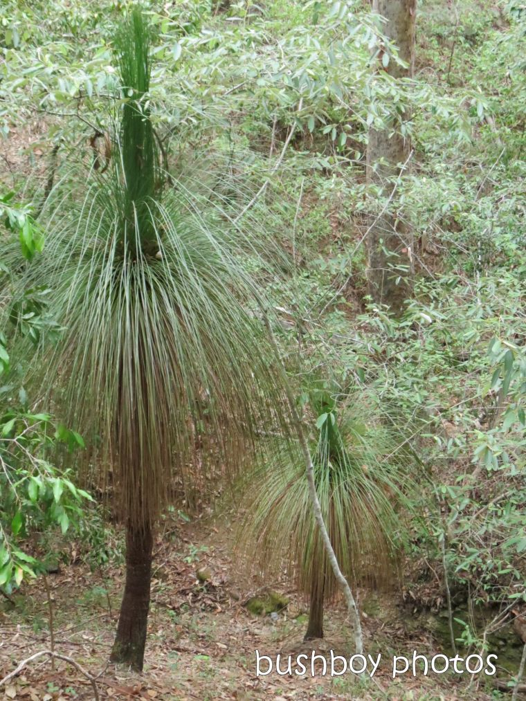 grass trees01_home_named_june 2014