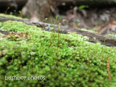 moss_hanging03_seeds_close_named_june 2014