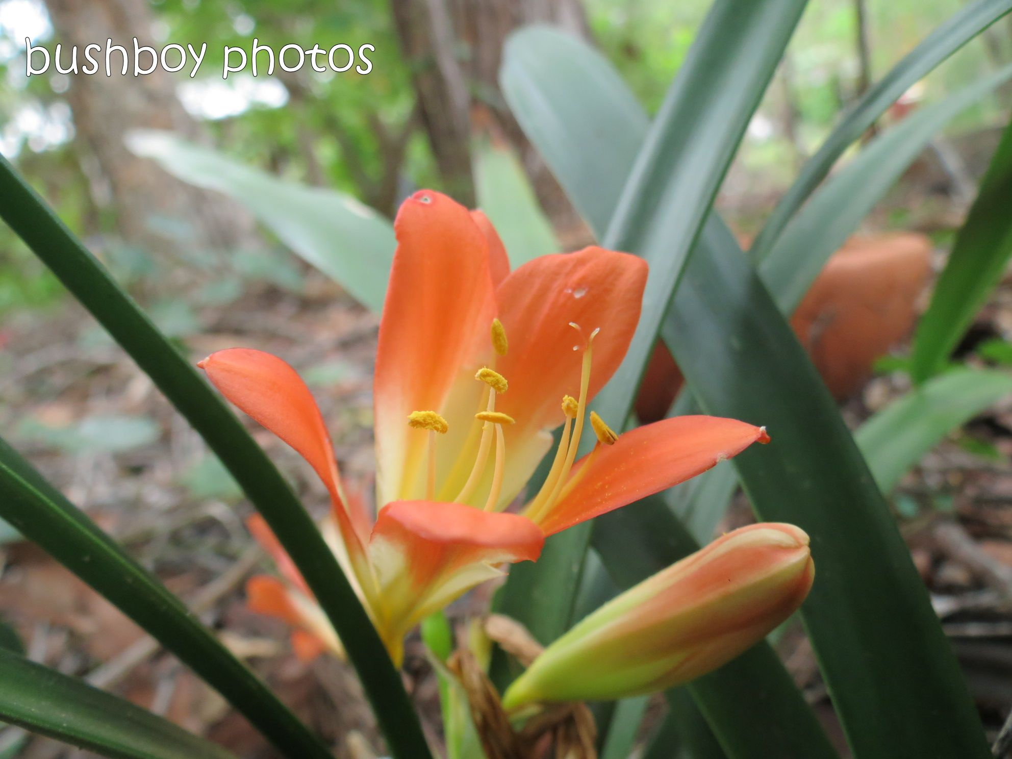 orange_flower_home_named_june 2014