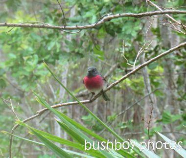 rose robin01_home_named_july 2014