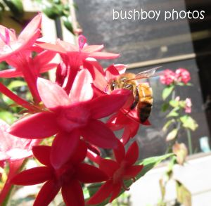 bee01_banora point_crop_august 2014