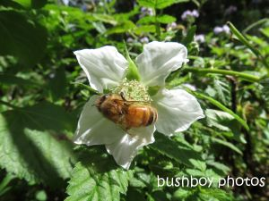 bee02_binna burra_named_aug 2014 - Copy