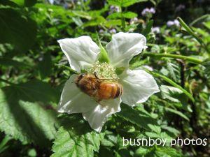bee02_binna burra_named_aug 2014 - Copy