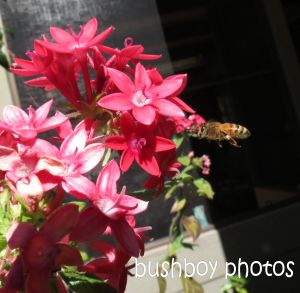 bee02_flying_banora point_crop_august 2014