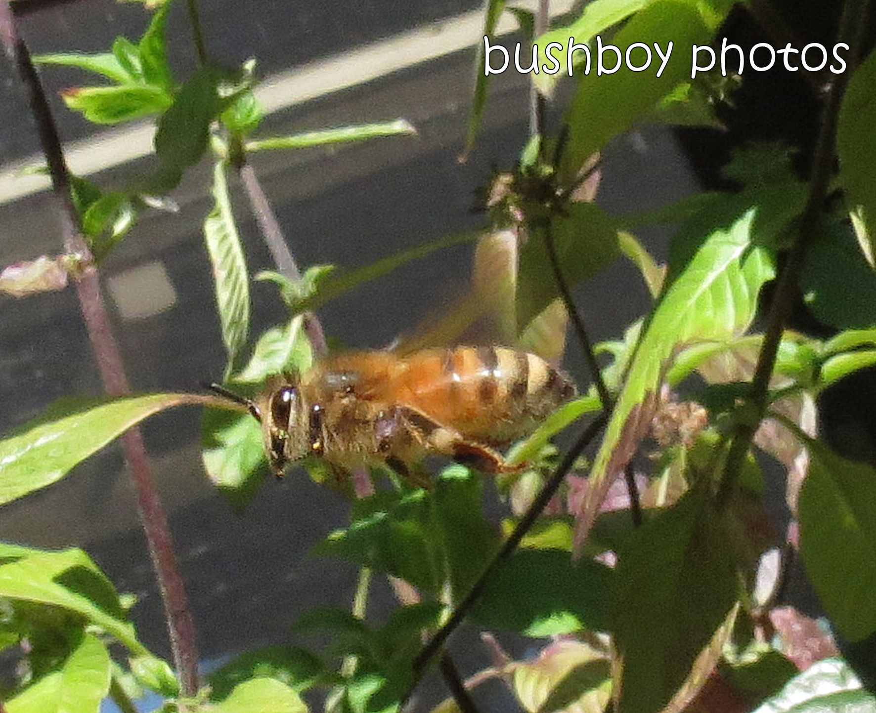 bee03_flying_banora point_crop_august 2014