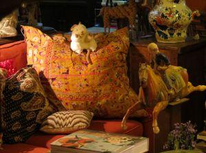 rat on cushion_resize