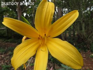 day lily_binna burra_named_sept 2014