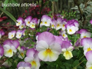 flowers01_binna burra_named_sept 2014