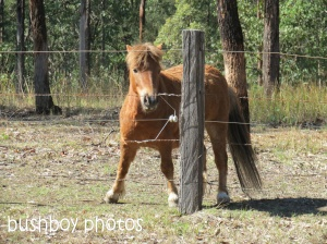little horse_duroux rd_named_sept 2014