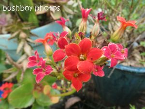 red flowers_binna burra_named_sept 2014