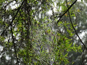 spider web_named_home_sept 2014