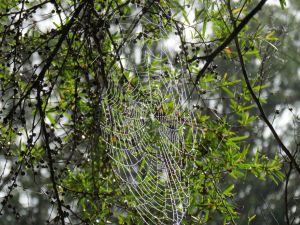 spider web_named_home_sept 2014