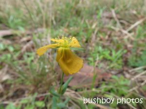 yellow flower_named_home_sept 2014