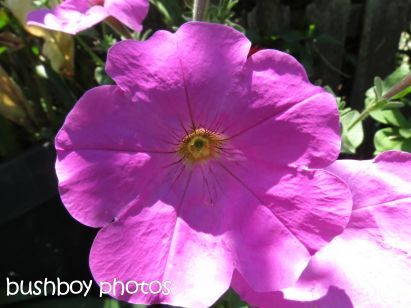 flower_purple_tucabia_named_oct 2014