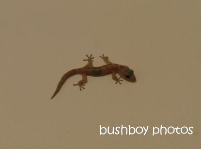 gecko_baby_home_named_oct 2014