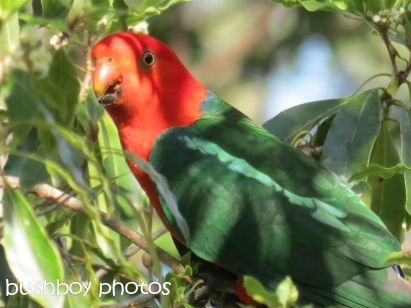 king parrot_home_named_oct 2014
