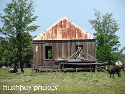 old shed01_clarence valley_named_oct 2014