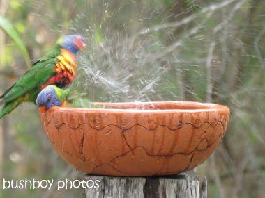 rainbow lorikeets06_bird bath_home_named_oct 2014