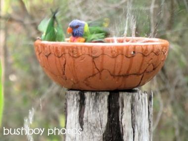 rainbow lorikeets_bird bath_home_named_oct 2014