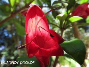red flower_binna burra_named_nov 2014