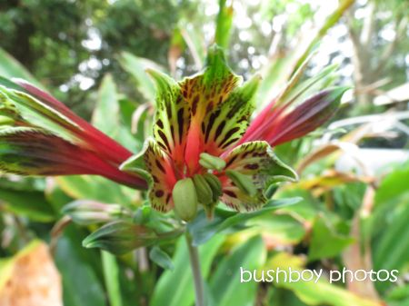 weed flower_binna burra_named_nov 2014