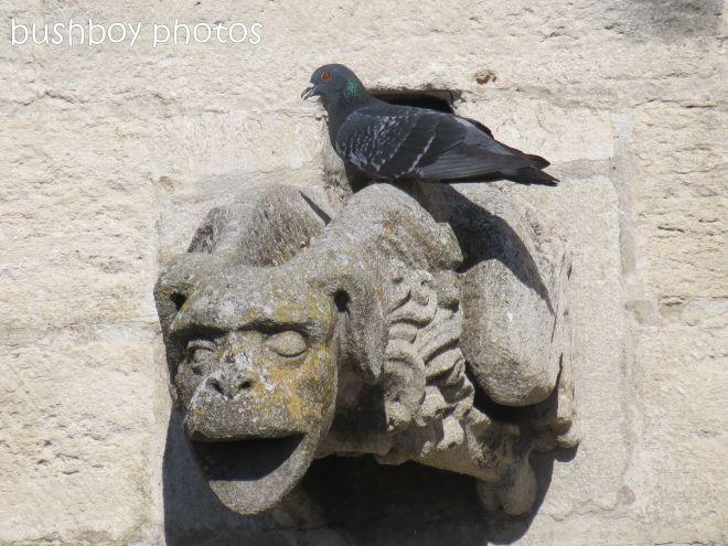 gargoyle_pigeon_avignon_may 2012