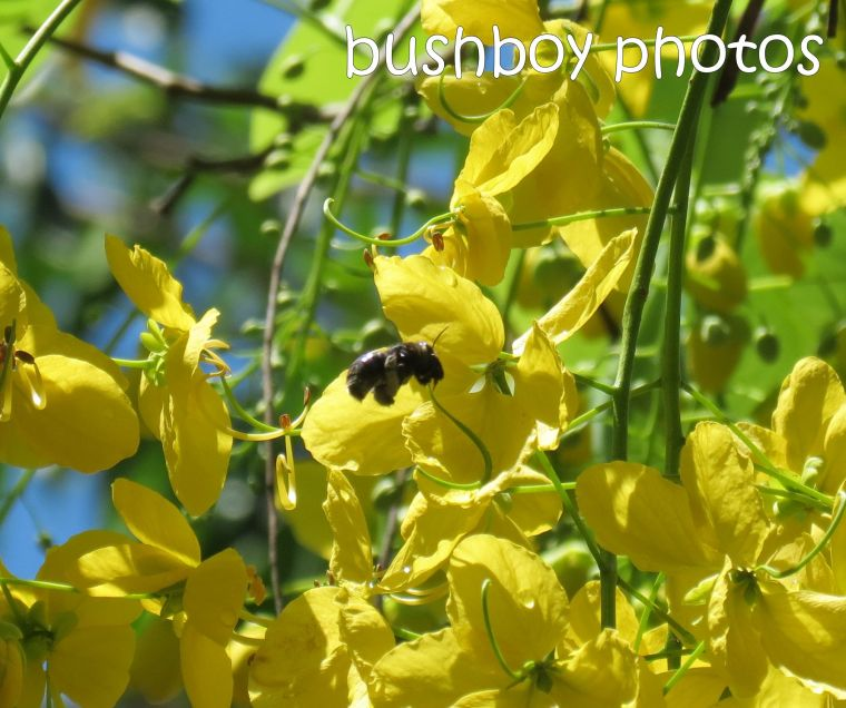 bee native_crop_named_home_jan 2015