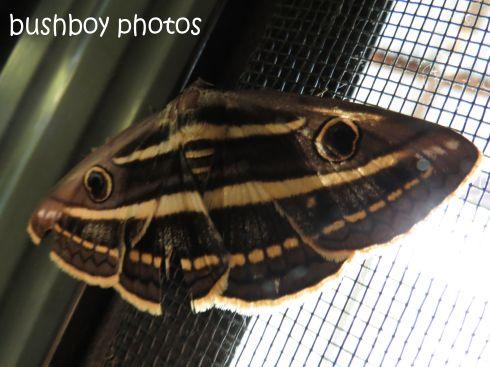 moth_named_home_jan 2015