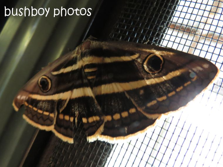 moth_named_home_jan 2015