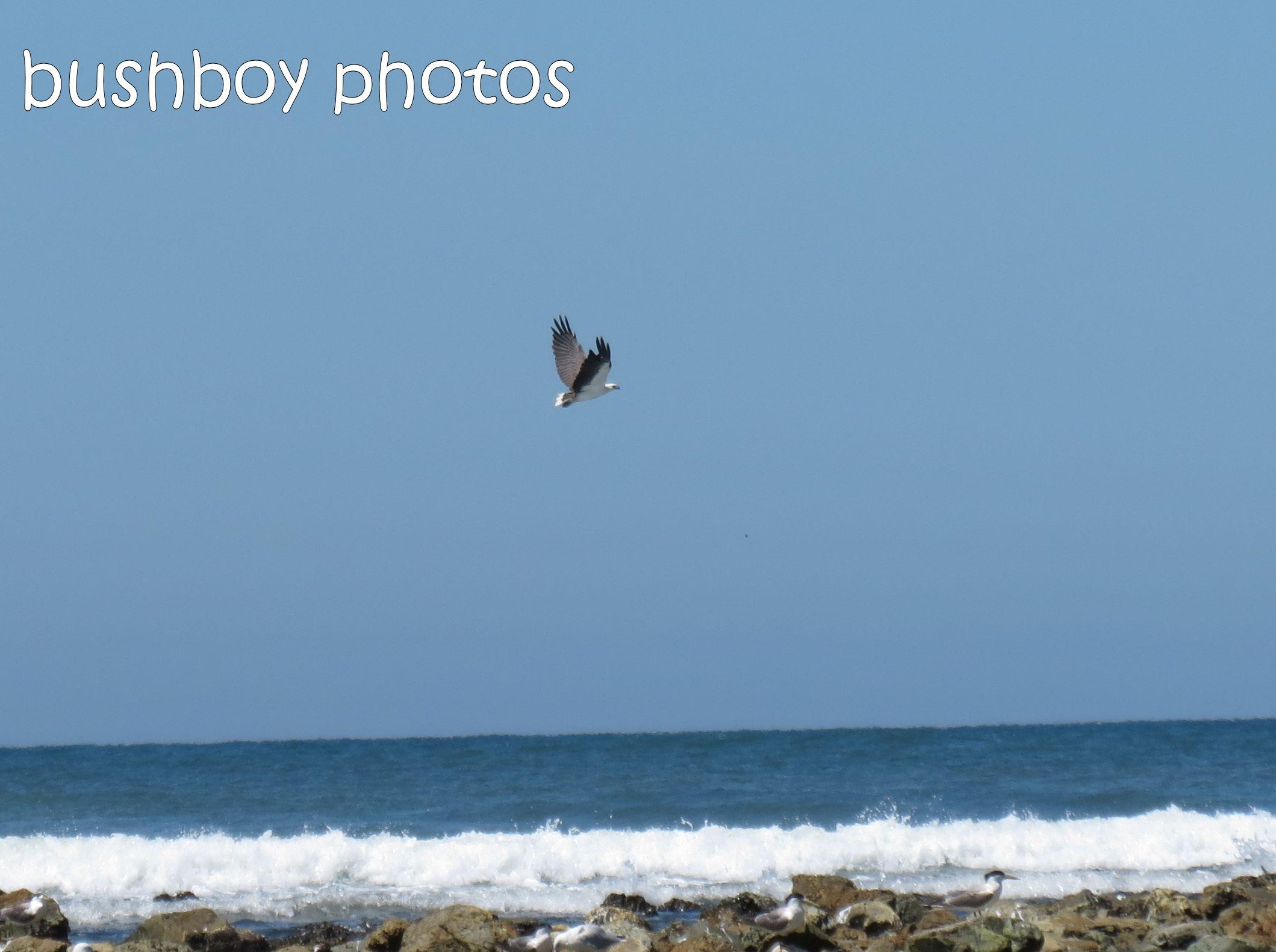 sea eagle01_named_brooms head_jan 2015