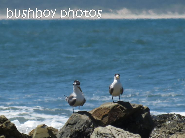 terns01_named_brooms head_jan 2015