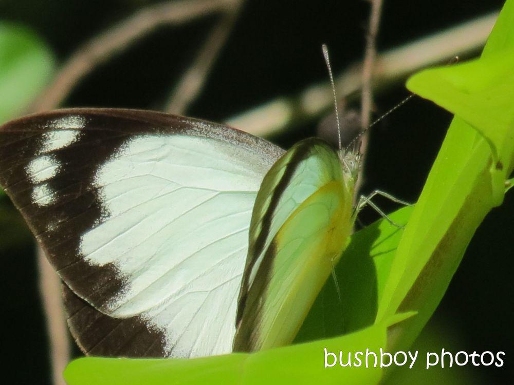 Februarys butterflies (5/6)