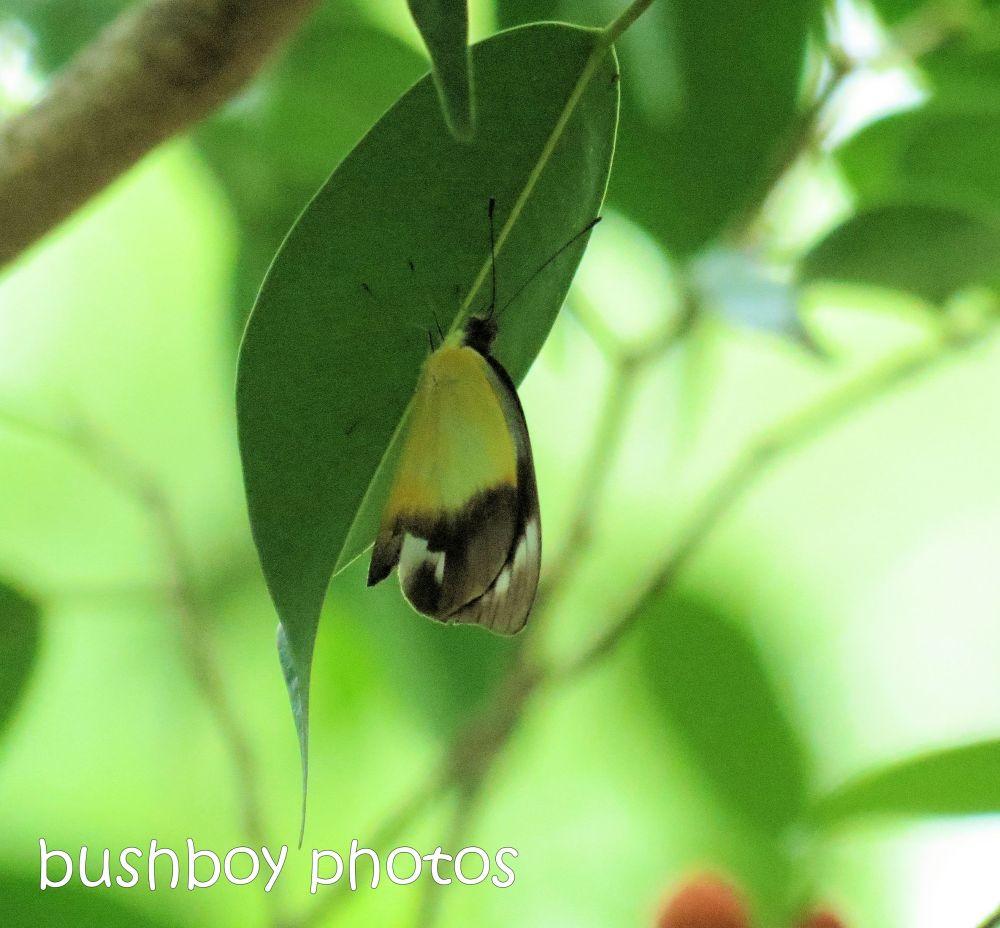 Februarys butterflies (3/6)