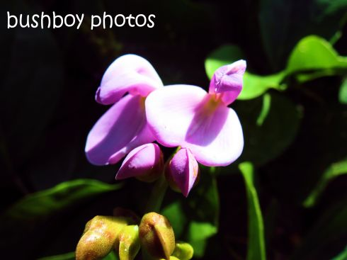 beach plant flower_ballina_named_few 2014