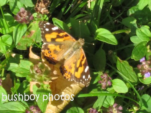 butterfly_named_orange_feb 2015