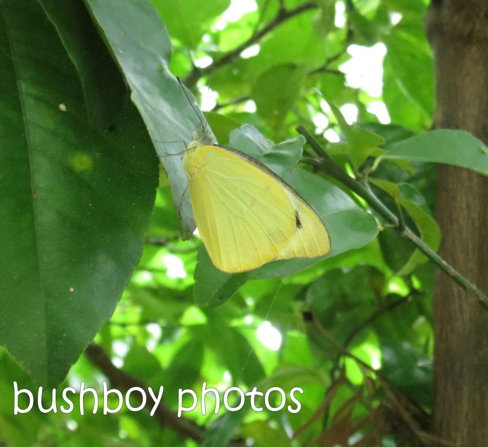 Februarys butterflies (2/6)
