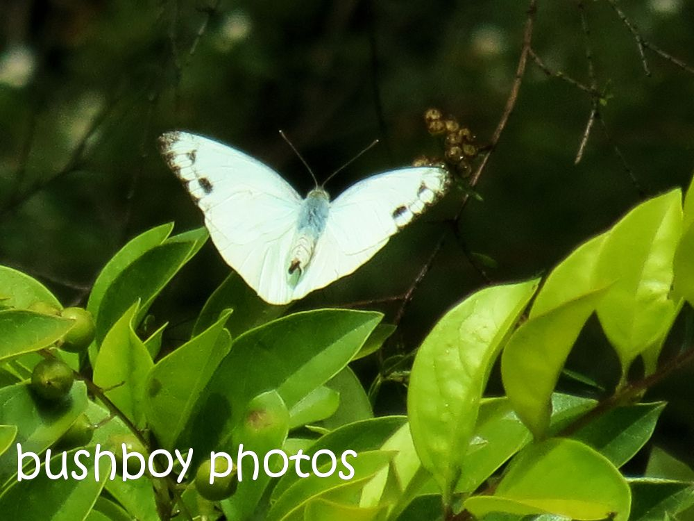 Februarys butterflies (6/6)